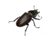 Pest Image